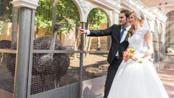 Kde uspořádat svatbu, svatba na zámku, svatba v zoo