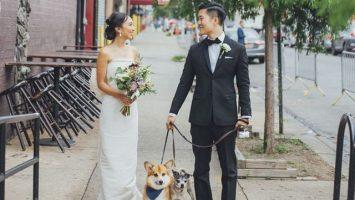 Svatební dort se psy